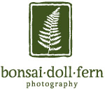 bonsai doll fern